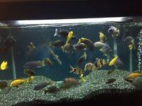 Fish tank full set up & Fish