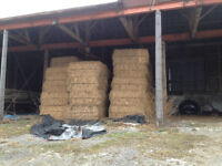 Large square bales of hay - feed for horses, cows, sheep