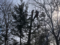 Tree removal services (Free quote and fair prices)