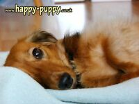 DOG WALKING,DOG BOARDING,CAT SITTING and more... Happy Puppy YOUR LOCAL PET CARERS / London