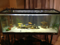 65 gallon tank and metal stand - Need gone ASAP