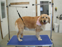 DOG GROOMING----STRATHROY AREA