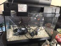 60litre fish tank tropical set up Aquarium