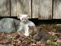Care for Feral Cats