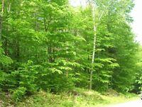 Magnifique terrain boisé (  Versant Nord de Mont-tremblant  )