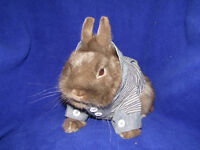 WE HAVE THE BEST QUALITY OF RABBITS IN THE GTA!!!!
