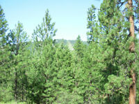 Lowest priced lot in Copper Ridge Grand Forks BC