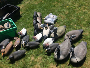 Duck and geese decoys for sale