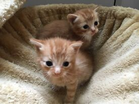 2 cute male kittens are looking for a new home