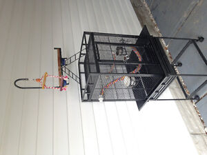 Large bird cages or sale