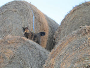 Kitty-Approved Organic Grass Hay - DELIVERED!
