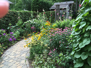 Organically grown hardy potted perennials and biennials