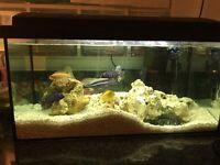 2 ft Established Tropical Fish Tank