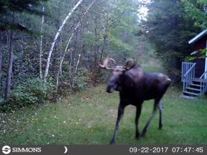 Terre de chasse (52 acres) avec un chalet rustique