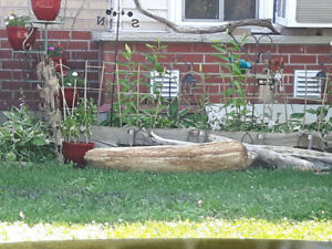 FREE DRIFTWOOD PIECE COME AND TAKE IT