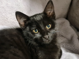 Black male 3 months old