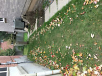 Slab laying in the backyard - small job