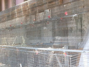 Chicken cages with water/feed trays attached.