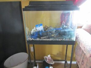 20 Gallon Fish Tank and stand