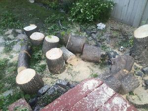 Free Maple Firewood!!!