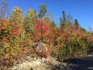 Très grands terrains Saguenay Saguenay-Lac-Saint-Jean image 2
