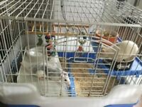 2 female and cage £10