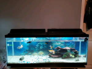50 gallon fish tank with fish can come with stand