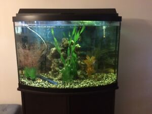 25gal Bow-front aquarium with stand and full set up