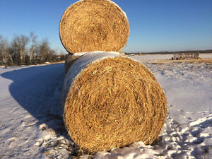 Greenfeed and hay