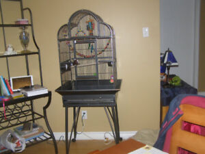 cage petit perroquet neuve
