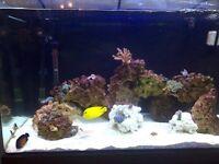 FULL MARINE FISH TANK SET UP