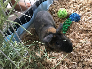 Skinny Pig and Penthouse Cage