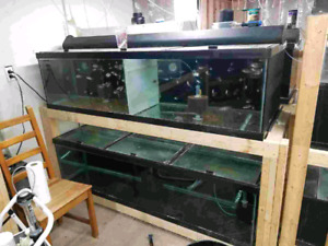 Tanks for sales from 10 gallons 250