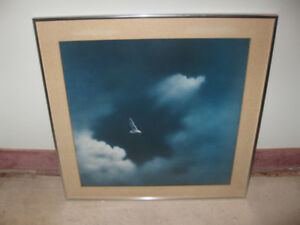Seagull in Clouds - framed print