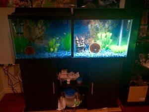 50 Gallon with Stand (Almost New!)