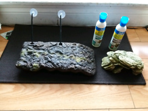 Turtle dock and conditioner