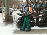 Landscapers/ Snow removers