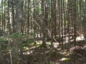 Water Frontage Property.Old farm 211 acre parcel of land. St. John's Newfoundland image 6