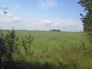 Lush 1/4 Section near Mackay/Chip Lake - Yellowhead County, AB Edmonton Edmonton Area image 7