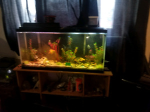 35 or 40 g tank and stand