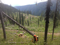Enform Chainsaw Faller Competency Program - Level 2 - Sept. 17th