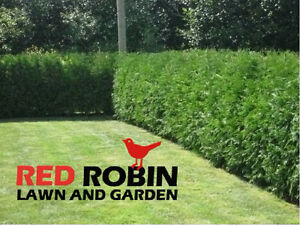 Cedar Hedge Trimming Cornwall Ontario image 1