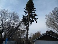 Johnny's Tree Maintenance-all your tree & bush cutting services