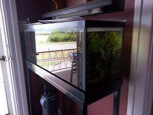 Bac d'aquarium 35 gallons