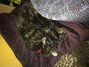 Molly; cat for rehoming