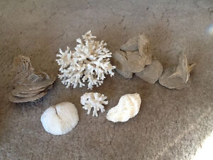 Dead Coral and Shells