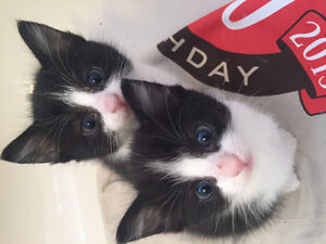 Cutie kittens looking for caring families