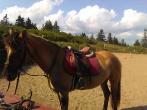 Horses for on property lease