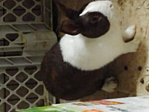 Rabbit needs a home