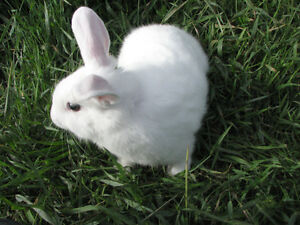 Baby bunnies  PRICE REDUCED